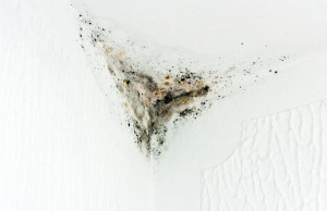 Mold Remediation Can Save Your Health