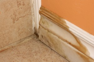 The Importance Of Mold Remediation