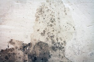 The Dangers Of Mold After Basement Flooding Or Water Damage