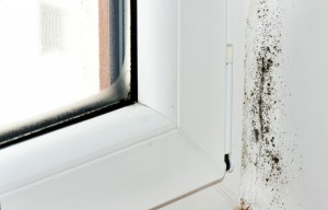 The High Costs Of Mold