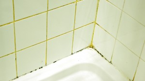 Identifying The Most Common Types Of Basement Mold