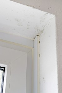 Mold Remediation Is An Immediate Concern For Anyone Who Has Had A Basement Flood