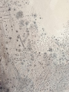 The Stranger In Your Home Is Mold