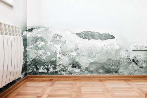 Mold Prevention Techniques