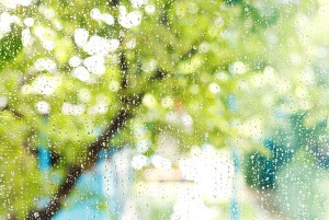 Summer Precipitation And The State Of Your Home