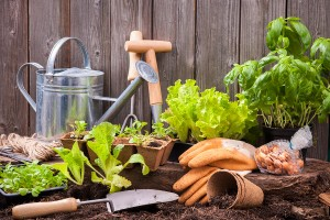 4 Tips For Planning Your Garden
