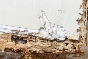 8 Basement Infestations Caused By Too Much Moisture