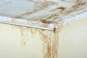 Mold Remediation 101