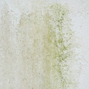 Mold Remediation In 7 Steps