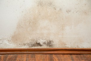 Should You Be Mold Testing Your Home?