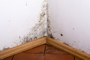 How Does Mold Grow Indoors?