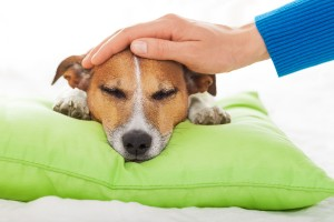 Mold And The Health Of Your Pets