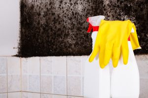 Mold Remediation Severn