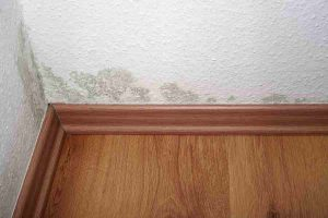 What You Should Know About Basement Mold