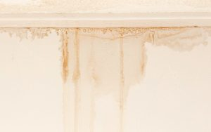 5 Reasons Why Your Basement Might Be Leaking
