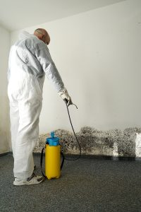 How Long Does Mold Remediation Take?