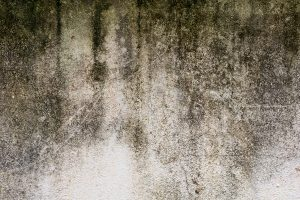 Know Your Fungus: Mold vs Mildew