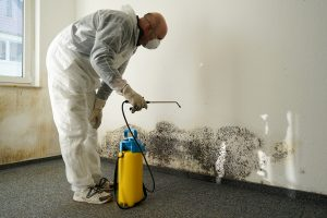 Mold Remediation In Marlow Heights