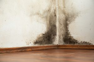Mold Remediation Damascus
