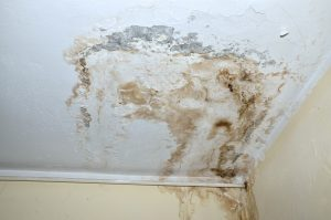 Mold Remediation Mount Airy