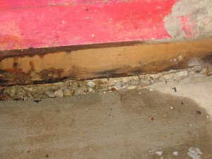 mold and water damage from basement leak