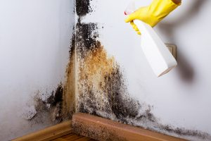 Is A Mold Spot Treatment Enough?