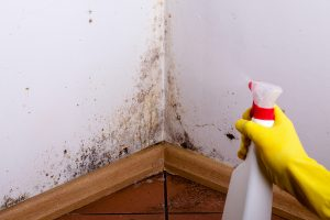 3 Signs It's Time For Mold Remediation