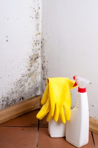 Why Mold Removal Is Not A DIY Project