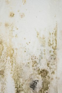 A Closer Look At Mold