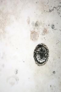 The Symptoms Of Toxic Black Mold Exposure
