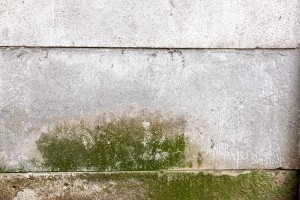 The Importance Of Protecting Yourself From Mold