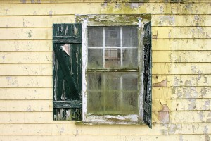 How Professionals Seek And Destroy Mold During Mold Remediation