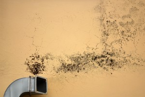 Mold Exposure Can Be Every Bit As Bad As Secondhand Smoke