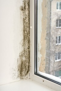 The Facts About Mold In Your Home