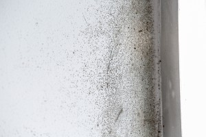 Mold Remediation Facts For Business Owners