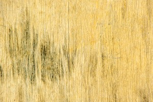 Is Mold Already A Problem In Your Home?