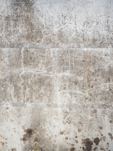The Dangers Of Mold Growth And What You Can Do About It