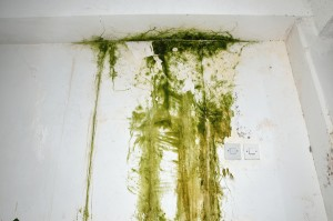 Familiarity Can Breed Mold