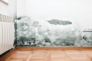 Mold Prevention Techniques