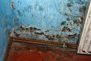 What You Need To Know About Mold During Winter