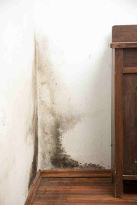 Can Mold Really Be That Bad?