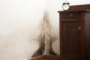 How Do You Remediate Mold?