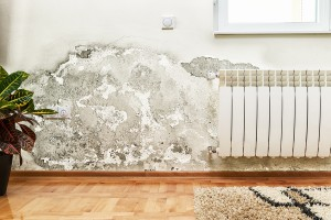 Are You Contributing To Winter Mold Growth?