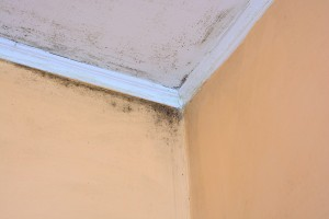 What To Expect With Mold Remediation
