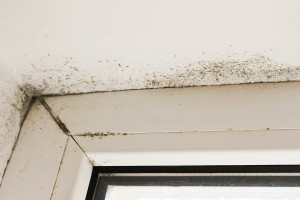Can Household Mold Cause Hair Loss?
