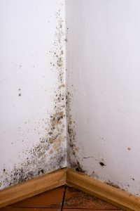 Mold Is A Bigger Deal Than You Think