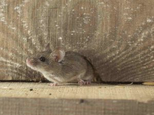 Should You Worry About A Damp Crawlspace?