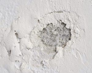 Mold After A Basement Flooding