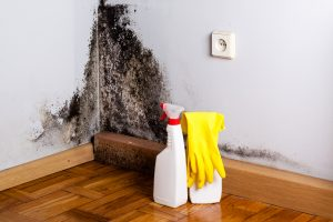 Mold Remediation Garrison