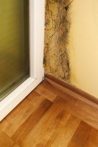 Mold Remediation Churchville